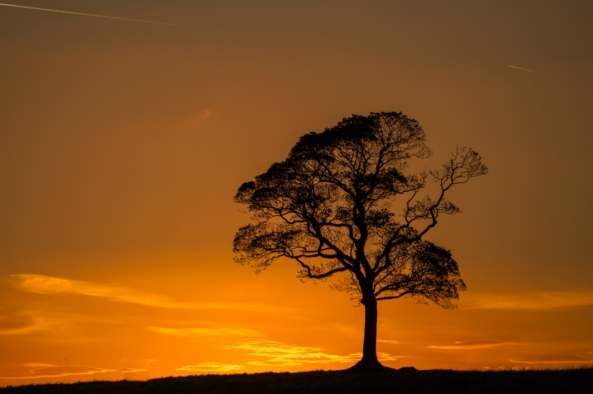 Lyme Park Tree