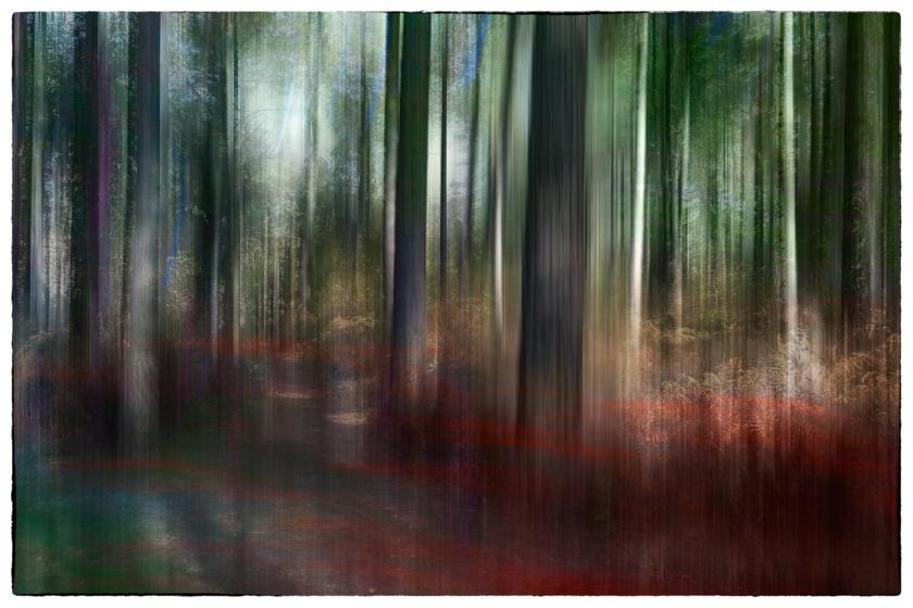Trees Autumn 3